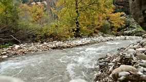 River in the forest at Karditsa Thessaly Greece stock footage