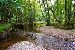 River in forest. In killarney Stock Image