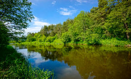 River in the forest landscape Royalty Free Stock Images