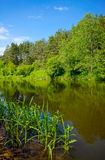 River in the forest landscape Stock Image