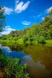 River in the forest landscape Royalty Free Stock Photo