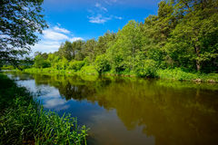 River in the forest landscape Royalty Free Stock Photos