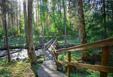 River in a forest with a little bridge stock photos