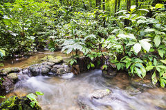 River in the forest. Long exposure of a river floading in the middle of a forest in Guatemala Stock Image