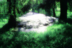 River in the forest Royalty Free Stock Photos