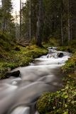 River in a forest. Nature, waterfall, green, tree, wood, roc stock photography
