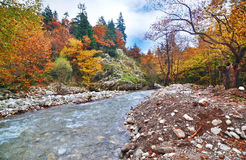 River in the forest near to lake Plastira Karditsa Greece Royalty Free Stock Image