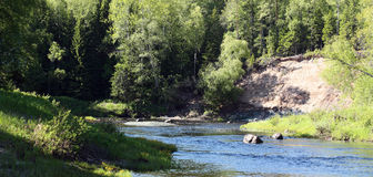 River in forest. Panorama. River in forest in the sun. Russia. Arkhangelsk Region. River Syuzma Royalty Free Stock Photography