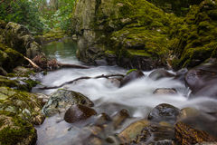 River in forest. A river passing through a river stock images
