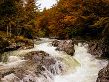 River in the forest with rapids. Autumn. Slovenia. Stock Photography