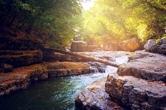 River in the forest Royalty Free Stock Photography