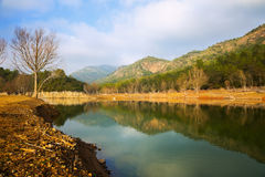 River with forest riverside in autumn day.  Muga, Catalan Pyrene. Es. Spain Royalty Free Stock Photography