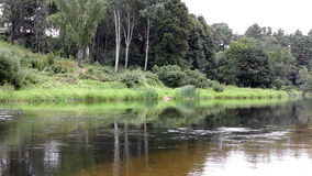 River in a forest stock footage