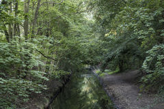 River through a forest Stock Photos