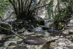 River in the forest in Sicily. Italy. Winter 2017 stock photo