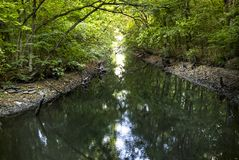 River in the forest. A small still river in the forest Royalty Free Stock Photo