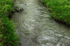 River in forest. Small river in wood. Fast water stream in forest Stock Image