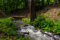 River in forest. Small river in wood. Fast water stream in forest Royalty Free Stock Images