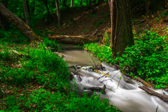 River in forest. Small river in wood. Fast water stream in forest Stock Photography