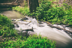 River in forest. Small river in wood. Fast water stream in forest Stock Photo