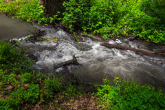 River in forest. Small river in wood. Fast water stream in forest Stock Images