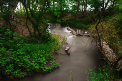 River in forest. Small river in wood. Fast water stream in forest Royalty Free Stock Photos