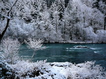 River in forest with snow. Cold water flowing in a river through a forest with snow Stock Photos