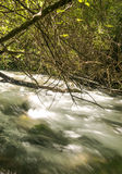 River in the forest Stock Image
