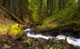 River in forest Stock Image