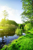 River and forest in spring Royalty Free Stock Photos