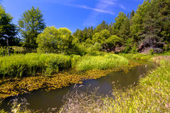 River and forest in summer. On a bright sunny day Royalty Free Stock Images