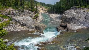 River in the forest at summer stock photography