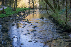 River in a forest Royalty Free Stock Photo