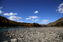 River from forest at Kanas Lake Royalty Free Stock Image