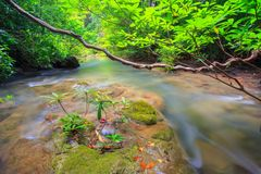 River in forest Royalty Free Stock Photos