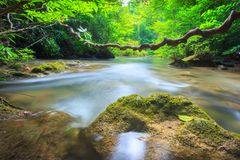 River in the forest Royalty Free Stock Image