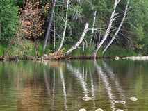 River in the forest with trees reflection, Altai Mountains, Kazakhstan.  Stock Photo