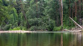River in the forest with trees reflection, Altai Mountains, Kazakhstan.  Stock Images