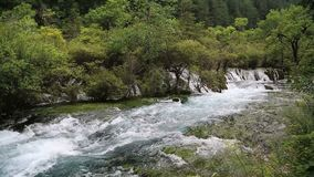 River in forest video stock video
