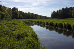 River and forest. Wide river flowing through the forest Stock Photo