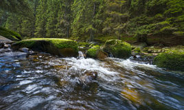 River and forest Royalty Free Stock Images
