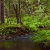 The river in the forest Royalty Free Stock Photo