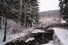 River in a forest during a winter day Stock Photos