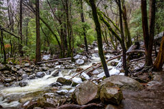 River at forest during winter - Yosemite National Park, Californ Royalty Free Stock Photos
