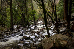 River at forest during winter - Yosemite National Park, California, USA Royalty Free Stock Photo