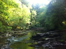 River in the forests of wales. Royalty Free Stock Image