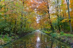 A river in a forrest during fall Royalty Free Stock Photo