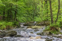 River in the forrest Stock Photography