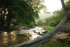 River in forrest Stock Photography