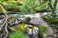 The River Fowey Royalty Free Stock Photos